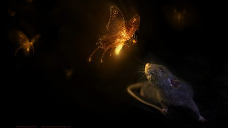 mouse, butterfly, black background