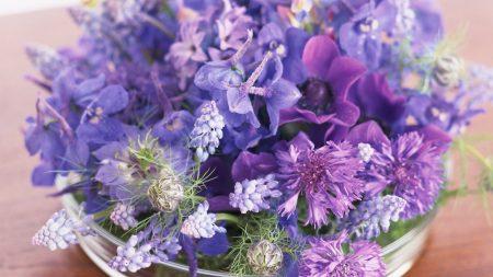 muscari, cornflowers, flowers