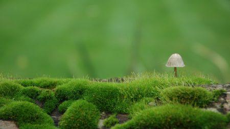 mushroom, moss, green