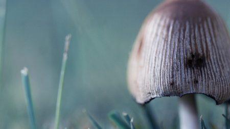 mushroom, toadstool, green