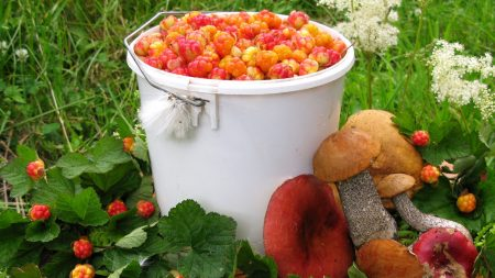 mushrooms, berries, bucket