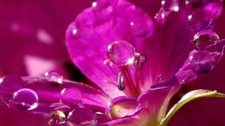 nature, flower, purple
