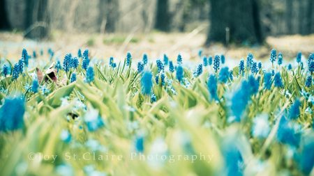 nature, flowers, beautiful