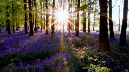 nature, trees, sunlight