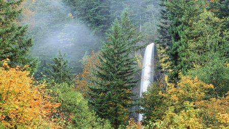nature, trees, years