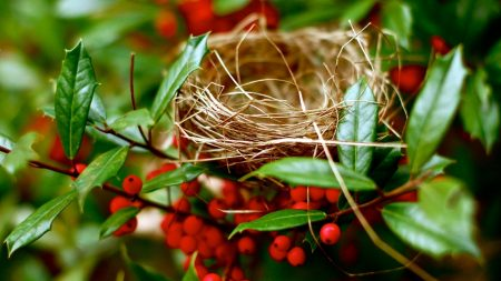nest, branches, berry