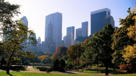 new york, central park, grass
