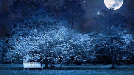 night, bench, park