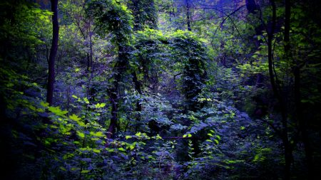 night, forest, nature