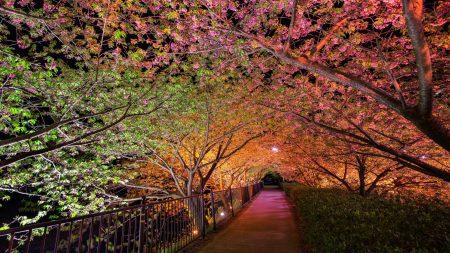 night, spring, park