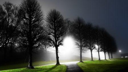 night, trees, avenue