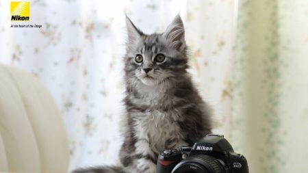 nikon, camera, cat