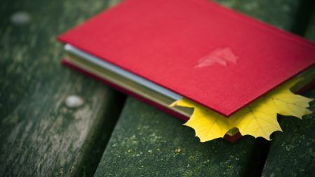 notebook, leaf, maple