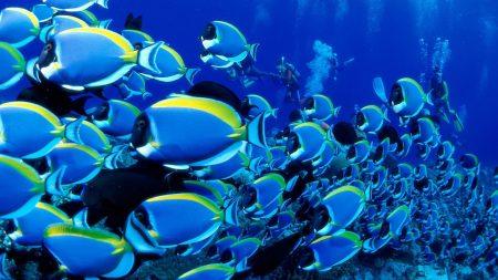 ocean, fish, set