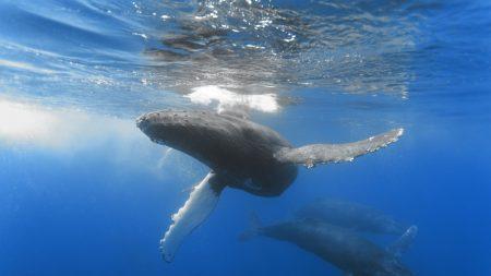 ocean, whale, depth