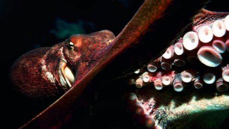 octopus, tentacles, circles