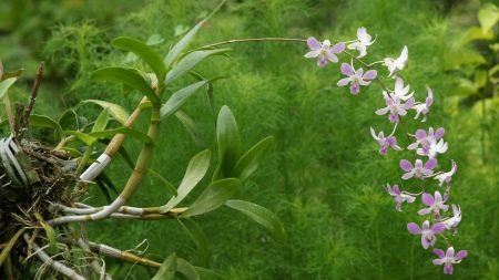 orchid, blossom, branch