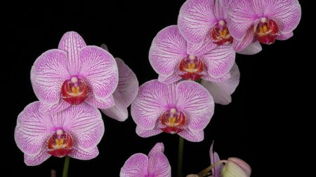 orchid, branch, pink