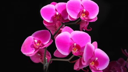orchid, flower, background