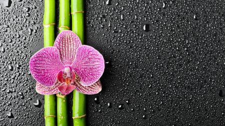orchid, flower, bamboo