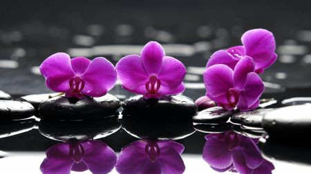 orchid, flower, bright
