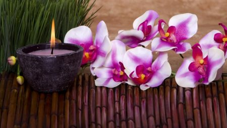 orchid, flower, candle
