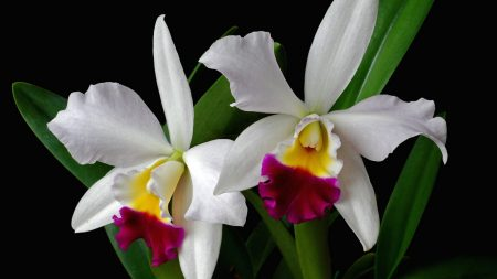orchid, flower, exotic