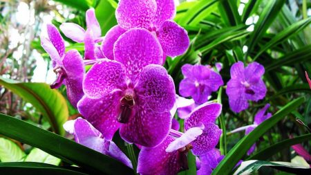 orchid, flower, purple