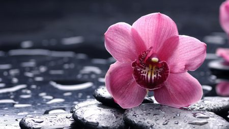 orchid, flower, stone