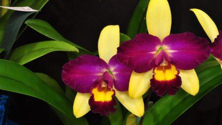 orchid, flower, violet