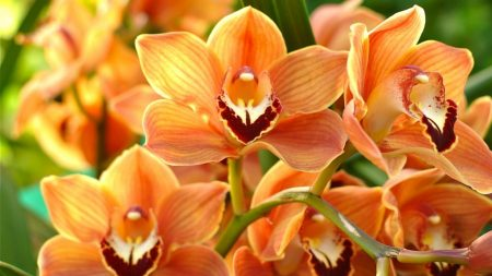 orchid, orange, bright