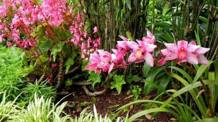 orchid, pink, park