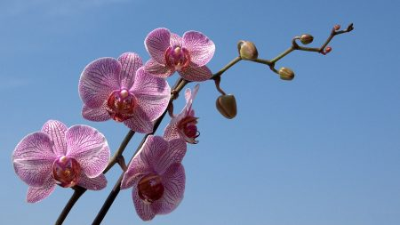 orchid, striped, sky
