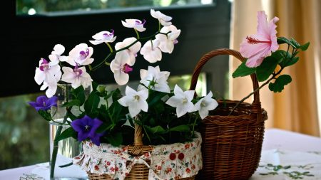 orchids, bells, hibiscus