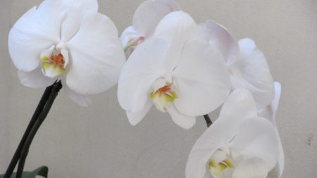 orchids, branch, flower