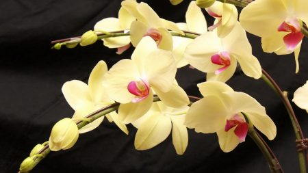 orchids, branches, flowers