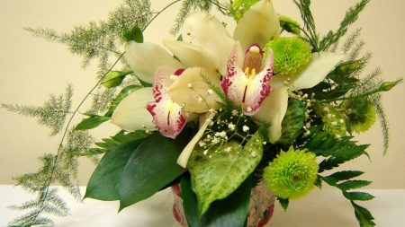 orchids, chrysanthemums, flowers