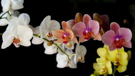 orchids, different, backgrounds