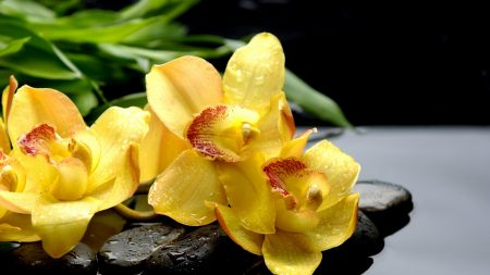 orchids, drops, rocks
