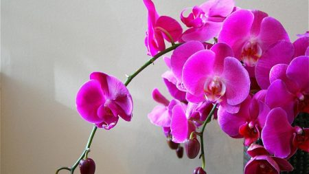 orchids, flowers, branch