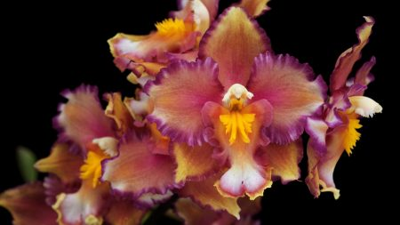 orchids, flowers, branches