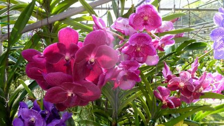 orchids, flowers, bright