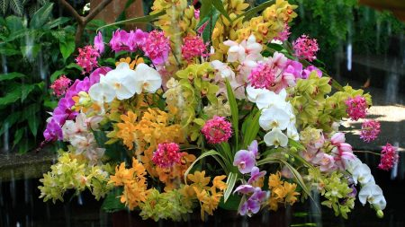 orchids, flowers, flower