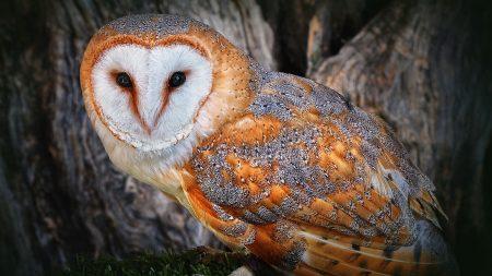 owl, beautiful, color