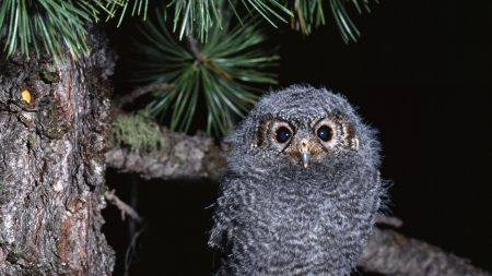 owl, branch, bird