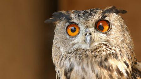 owl, eyes, surprise