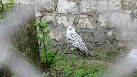 owl, grass, rocks