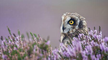 owl, lavender, profile
