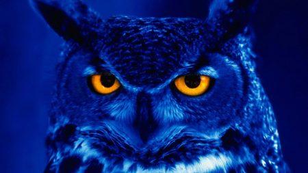 owl, predator, bird