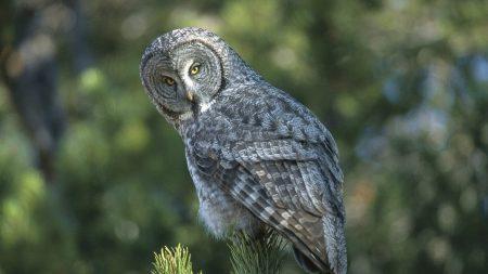 owl, spruce, opinion